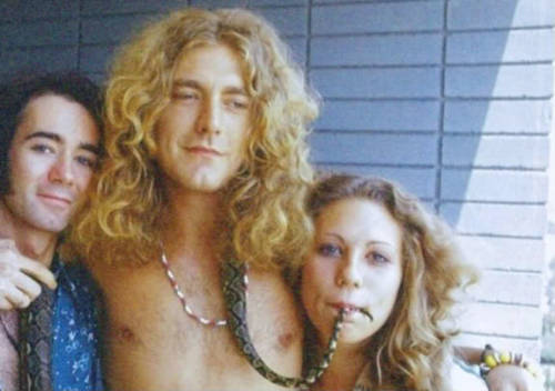 emily-zeppelin:  robertplantdoingthings:  Robert Plant poses with a snake, a groupie, and Kevin Jonas of the Jonas Brothers.  OMFG IT'S KEVIN  omfg i am crying
