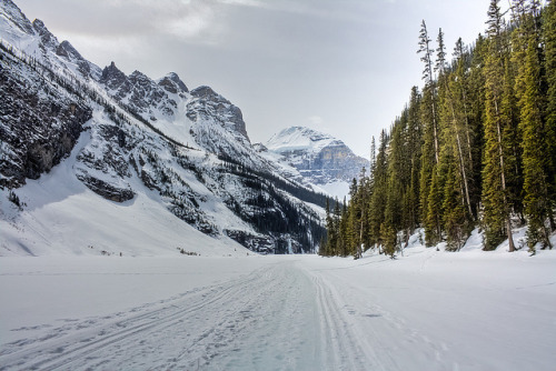 itsmattography:   Skiers track on Lake Louise by JoLoLog on Flickr.