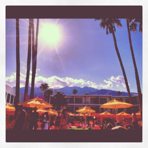 #awesomized palm springs vibes (Taken with instagram)
