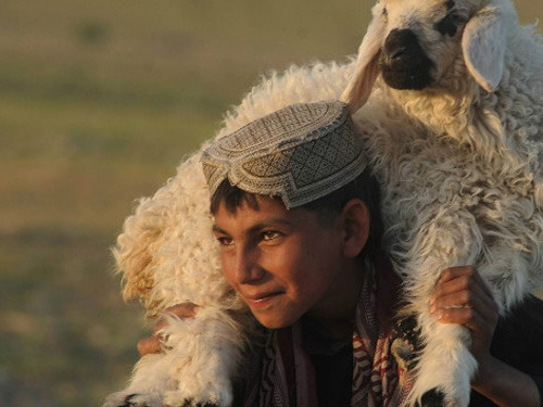 An Afghan boy carries a sheep on his shoulders on the outskirts of Herat on April 10, 2012. Source: CNN Daily Snapshot