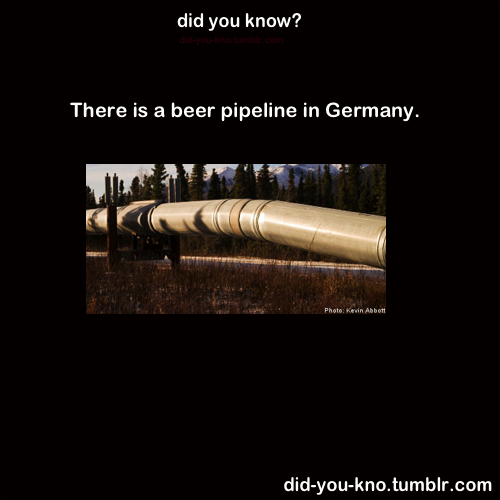 did-you-kno:  The pipeline once burst and created a 30m Beer-Fountain. Source
