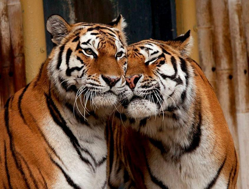 llbwwb:  Affection in Antwerpen Zoo By:jujuba