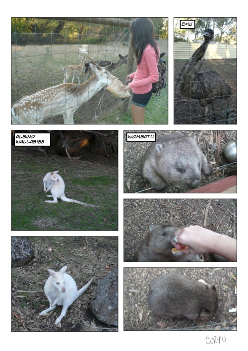 Everybody meet my new favourite animal; The Wombat! I want to somehow bring one of these cute pudgy animals home as a pet. I can't believe it's taken this long to see a real one (there was that Statue on Swanston St). I'm in love & I want one… Maybe I'll just crochet one! Other than that there were also Aussie deers, creepy emus, & albino wallabies. I hadn't thought that albino wallabies existed until we saw them hopping around. Apparently these wallabies a really special breed & have been taken in by this place for their protection. Breeding two albino wallabies together can just cause a mess of illnesses & diseases which tend to happen in the wild. So they've been taken to be separated here to breed with others where the albino gene can be passed on through generations instead. (I'm learning a lot on this trip!) Next up: A baby Joey! -Cory U
