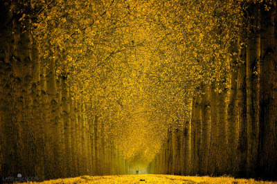 skotia:  Cycle in Gold (by larsvandegoor.com)