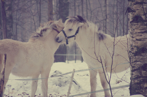 horsesornothing:  Friends by syysvilja on Flickr.