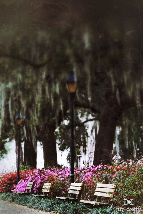 Savannah. I'm grateful for the opportunity to visit and photograph places such as this.