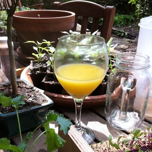awelltraveledwoman:  So many days in a row #mimosa #seeding  (Taken with instagram)