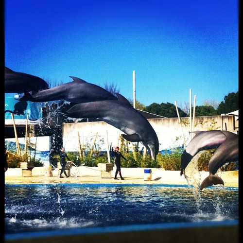 #dolphin #zoo #wildlife  (Taken with instagram)
