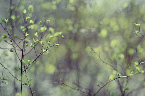 januarymidnight:  Spring Bloom by Danired on Flickr.