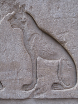 aboutegypt:  Bastet at Edfu (by hewy)