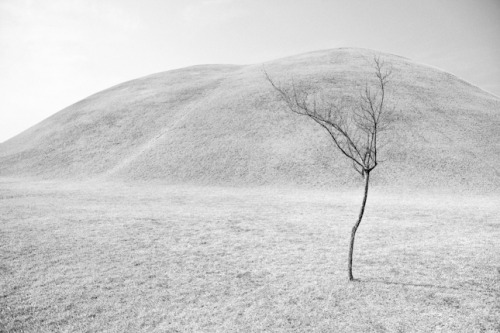 LS 07|Trees Submissions - Seeking Eternity by Stephanie Borcard | Nicolas Metraux  All images © courtesy of Stephanie Borcard | Nicolas Metraux  www.bm-photo.ch