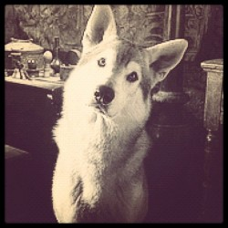 A photo Arya Stark took of Nymeria during happier times