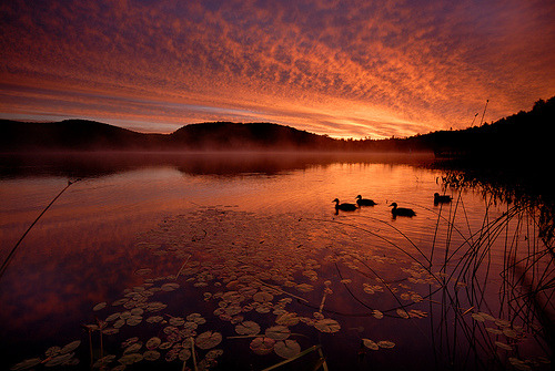 hydrazine:  Sunrise with Ducks (by Peter Bowers)