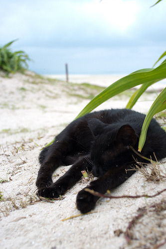 photogenicfelines:  Taketomi island 2011 Summer (by Shigeto Sugita)