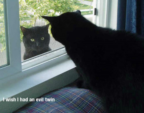 I Wish I Had An Evil Twin… or in my case a twin who wouldn't mind me fobbing off work etc onto. In other words sorry for the lack of posts over the past few weeks.