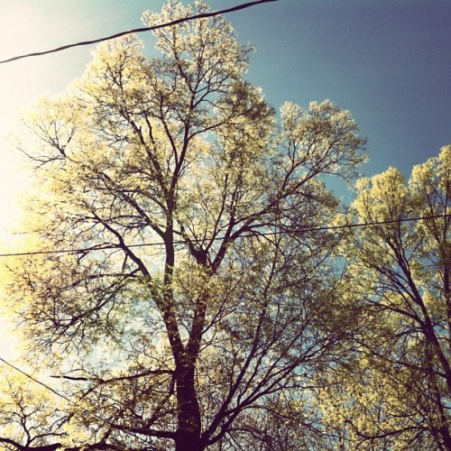 backyard. (Taken with instagram)