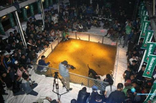 "empatheticvegan:  Boycott Heineken, they sponsor dog fights. Also watch out for the other brands they brew. EDIT: Heineken had this to say. ""Images are circulating on a number of websites showing what appears to be an illegal dogfight with Heineken banners (placed upside down) clearly visible. HEINEKEN is shocked and disappointed by this image. HEINEKEN is not and would never knowingly be associated with illegal activities, including those involving cruelty to animals. This is a gross misrepresentation of our brand and our legal team is now investigating the source of the picture and will take the necessary measures. We ask anyone with information regarding this picture such as the source, or the venue where it has been taken to contact us."" Opinion (not fact): I'm still not convinced, Heineken have the ability to find what venue these banners are hung in, so they should be doing so if they want to redeem themselves. No company that sponsors dog fights is going to come out and say ""Oh yeh we sponsor illegal activities"". Just like no company that tests on animals labels the packaging ""TESTED ON ANIMALS"".   Edit #2: ""Dog fighting has been popular in many countries throughout history and continues to be practised both legally and illegally around the world."" (source)  So they could be legally sponsoring a dog fight, since heineken is an international brand."