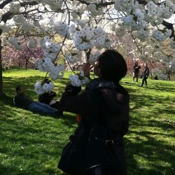 The cherry blossoms really smelled like cherries.