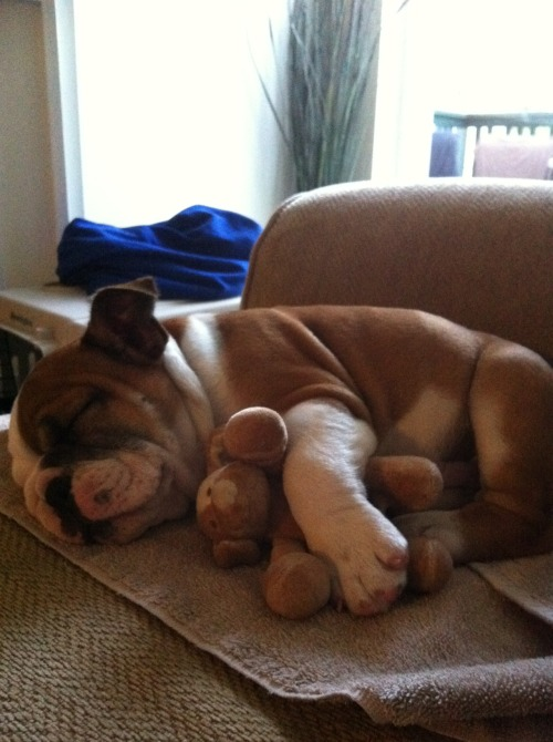 animalswithstuffedanimals:  Lola and her little puppy. Submitted by Christine