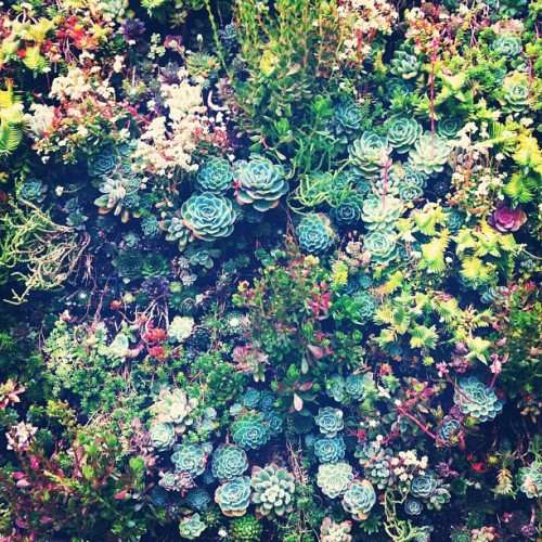 misschiquita:  Colorful succulents, yahh please.