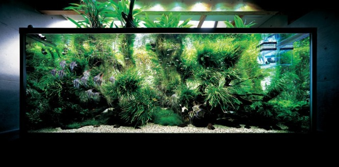 homedesigning:  Nature Aquariums and Aquascaping Inspiration  Want to do this, its so pretty and awe inspiring.