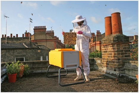 """sticky-tires:  image credit:Omlet """"Not content with havingreinvented the modern chicken coop, the folks at UK-basedOmletare now launching an entirely new design of beehive, and it's creating quite a buzz. (Sorry!) According to the New York Times, it's all part of amassive growth in urban beekeeping. Natural England, a UK government conservation agency, will be installing one of Omlet's new hives on its roof in central London.The Beehausis being billed as the next step in innovation in beehives for the 21st century. (The standard Langstroth hive has remained pretty much unchanged since the start of the 20th century.) Featuring triple insulation for winter warmth and summer cool, a guarded, wasp proof entrance, good ventilation, and more space than your average hive - the Beehaus looks like an attractive concept."""" datadrivenplanning:  Rooftop Beekeepers   My mom thinks I should keep bees down the road. My s/o is almost deathly allergic and carries an epipen. We assume his daughter would be as well. /sigh"""