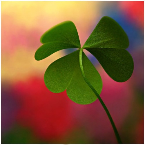 If you ever find a clover with 4 petals.. apparently you can make a wish…if you believe in it..it will come true <3
