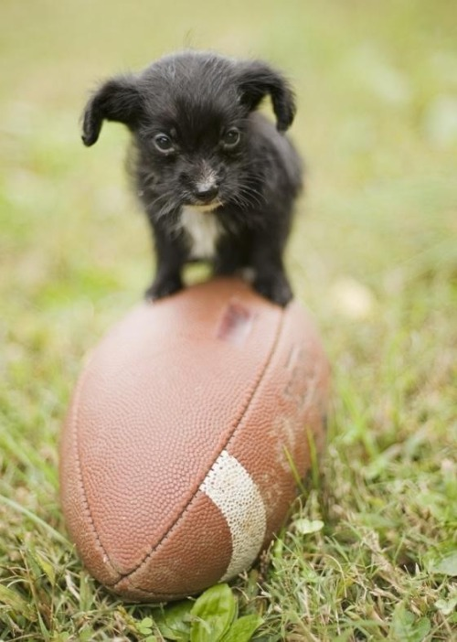 wastetheday:  Still a better Quarterback than Tebow….