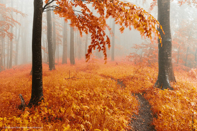 aigla:  Golden Forest (by Evgeni Dinev)