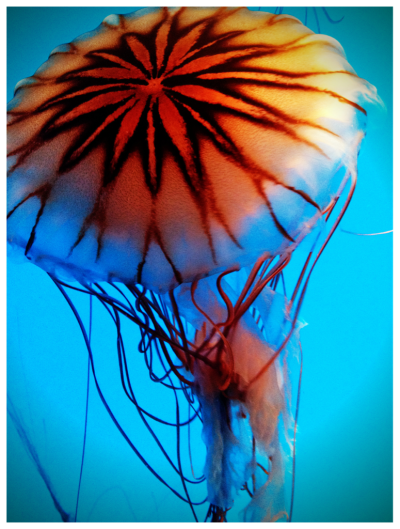 youdontdream:  Another jelly from the Baltimore National Aquarium