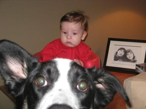 wastetheday:  Photo bomb or a baby on a huge dog?