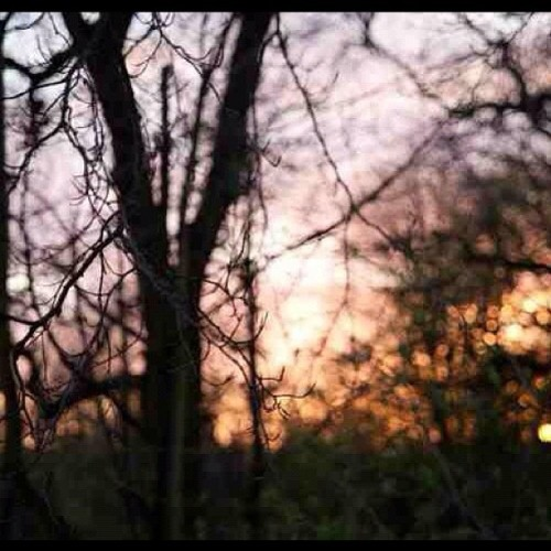 Day 15- sunset #aprilchallenge #love #aprilphotoday #aprilphotoaday #aprilphotochallenge #photooftheday #instagrammer #velvetfluerphotography #popular #chorley #astley hall (Taken with instagram)