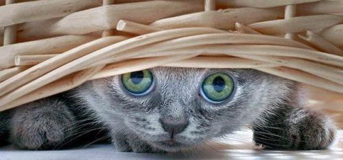 magicalnaturetour:  I see you :)