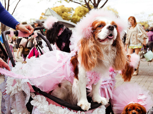 Dogs in Dresses, Harajuku by tokyofashion on Flickr.OMG ♥