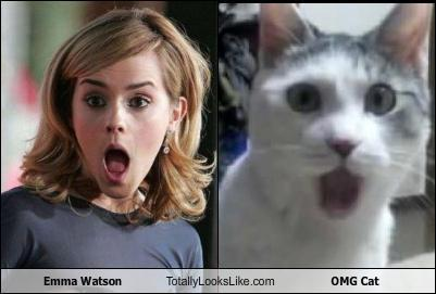 harrypottersection:  similiar? yeah, i think so