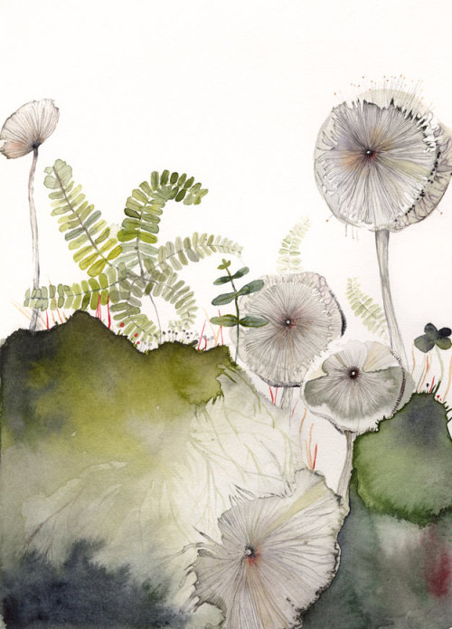 Maidenhair and Mushrooms, print, by Amber Alexander, Vermont.