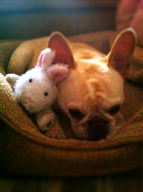 "walter likes to call this one ""two bunnies in repose."""