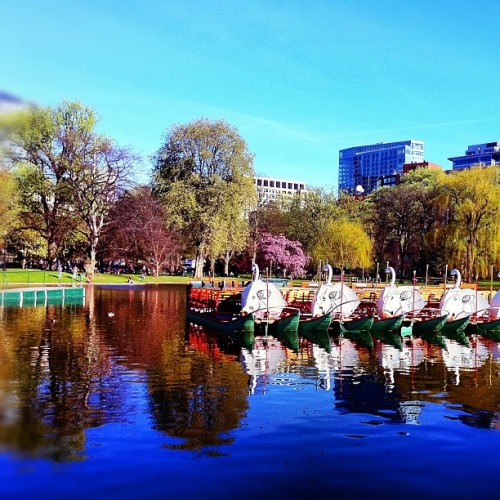 Swan Boats are swimming (Taken with instagram)