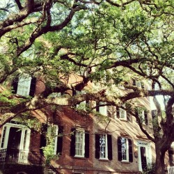 seersuckerandmagnolias:  West Jones Street, Savannah