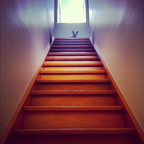 Someone is a tad frightened of the stairs at my new house!