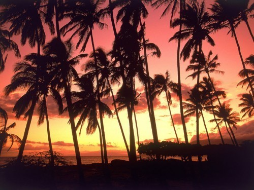 cocoschanelsworld:  The Beauty of Sunset Hawaii *_*