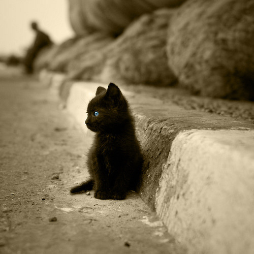 liftyourhandstowardsthesun:  Wittle kitty <3
