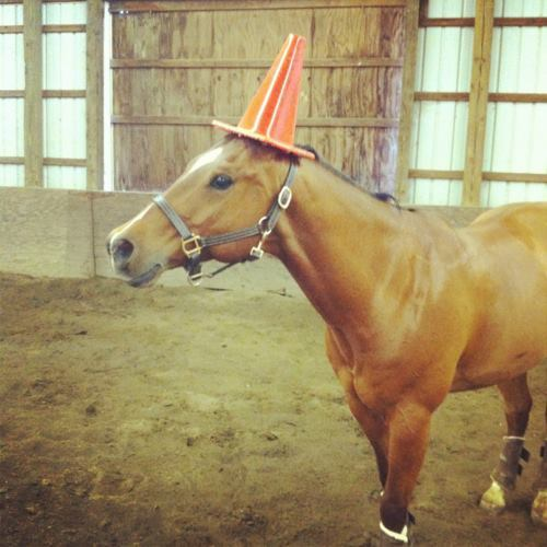One day… I'll be a unicorn.  画