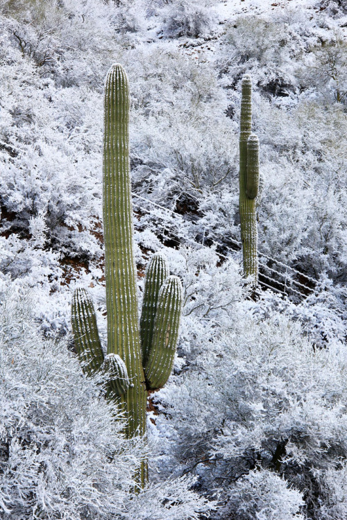 Embarrassing Disasters #734: Slip on icy hill, tumble into cactus, laugh so hard at your own idiocy that you repeat the performance thrice.  Require fifteen stitches in your arse.