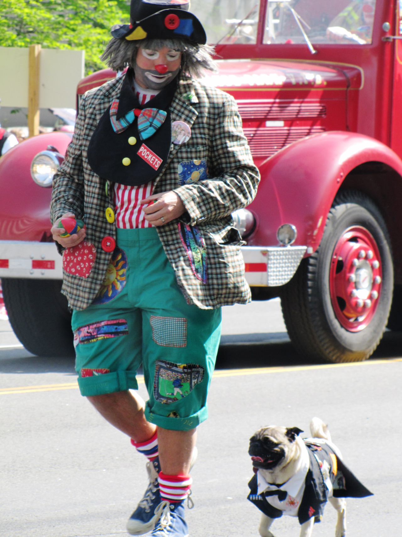 Clown and his pug in the Cherry Blossom Parade, DC.
