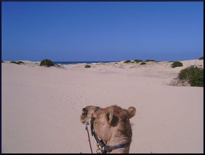 Riding a camel, Anna Bay, Australia