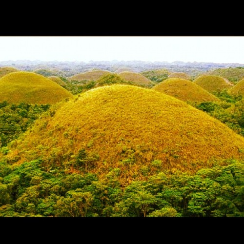 Missing Chocolate Hills, Bohol @joycegoddess #instamood #igersmanila #photoaday #iphone #igdaily #instagramers #instagramhub #instadaily #iphoneasia #instagood  (Taken with instagram)