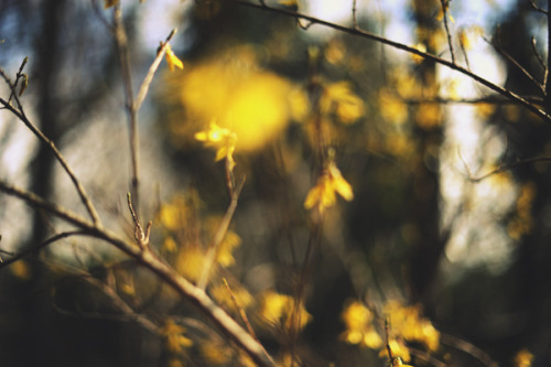 April on Flickr.Anne Marthe Widvey Photography