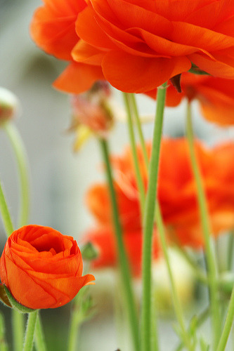prettylittleflower:  orange (by Laura O Photo)