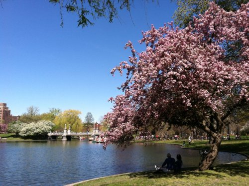 Wish life was like this everyday (Boston Public Garden - 04/18/2012)